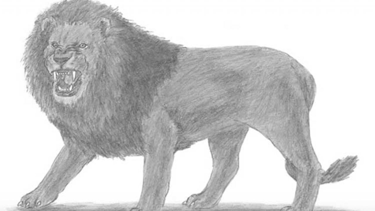 How To Draw A Lion Step By Step In Pencil And Face Roaring Learn how to paint a realistic lion portrait in this free step by step acrylic painting tutorial by angela anderson. to draw a lion step by step in pencil