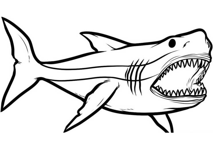 How to draw megalodon