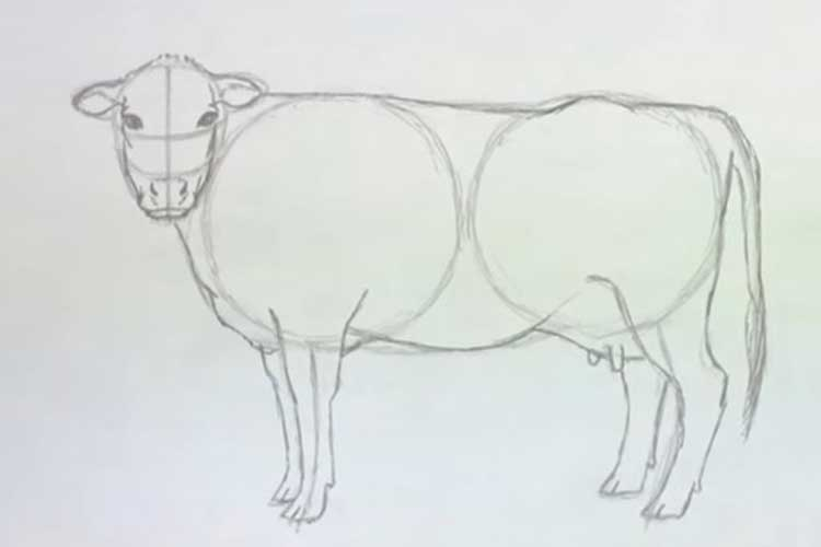 How to Draw a Cow