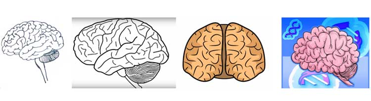 How to draw a brain: the easy way, its parts, stem ...