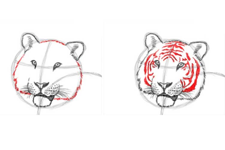 how to draw a tiger step by step for beginners