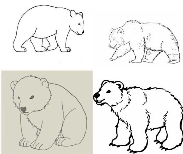How to draw a bear i