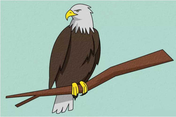 How To Draw An Eagle Flying Realistic Head Easy And Step By Step