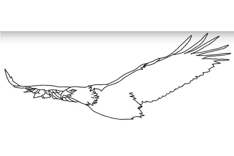 How to draw an eagle flying