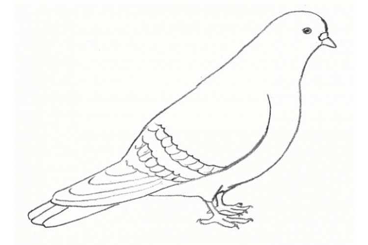 How to draw a dove: With Color, Pencil, Bright Images