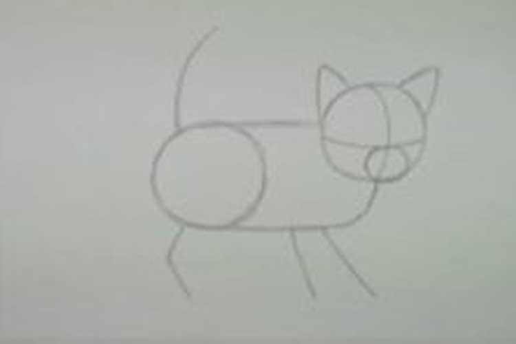 How to draw a kitten