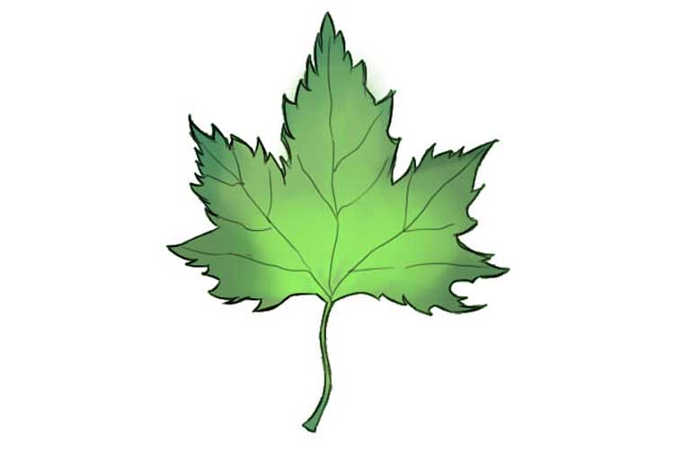 How to draw leaves