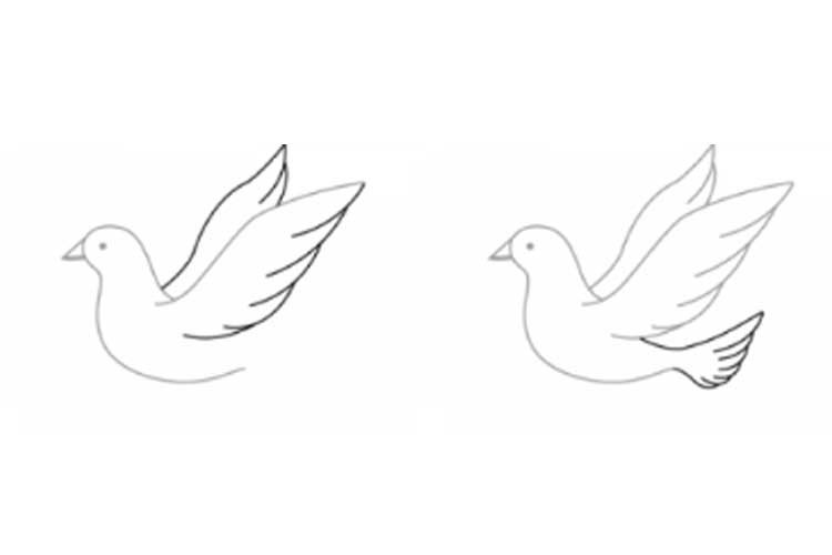 dove drawing