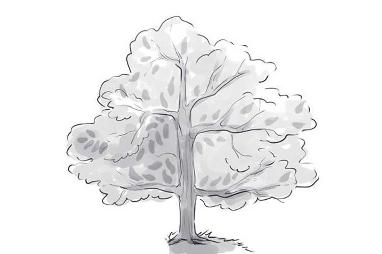 Cartoon Tree With Three Branches / Choose from over a million free vectors, clipart graphics, vector art images, design templates, and illustrations created by artists worldwide!