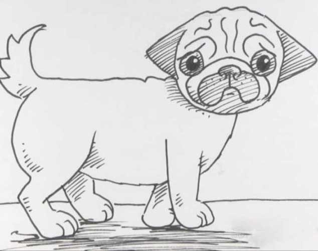 How To Draw A Pug Cute Very Easy And Separately His Face
