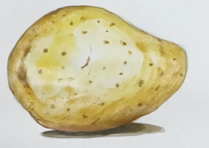 How to draw potato