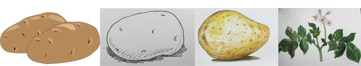 How to draw potato
