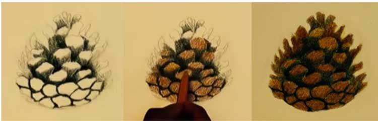 Pine cone drawing