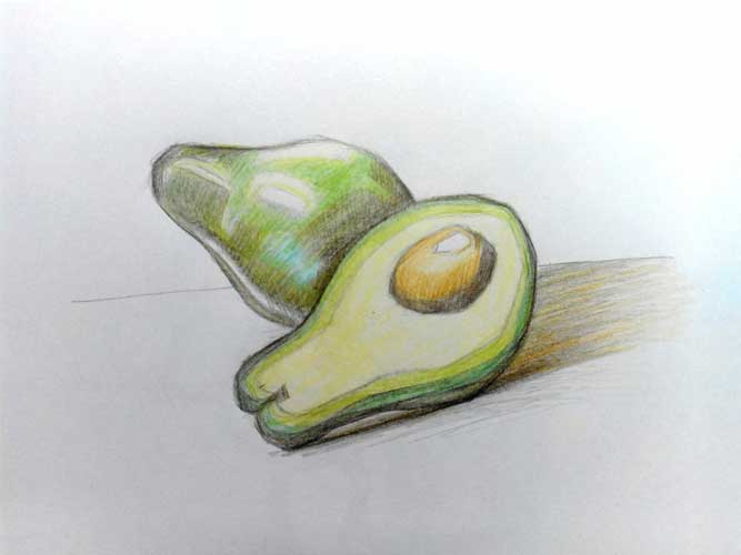 Avocado drawing