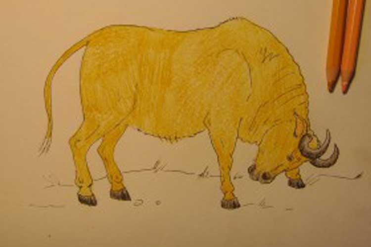 Bull drawing
