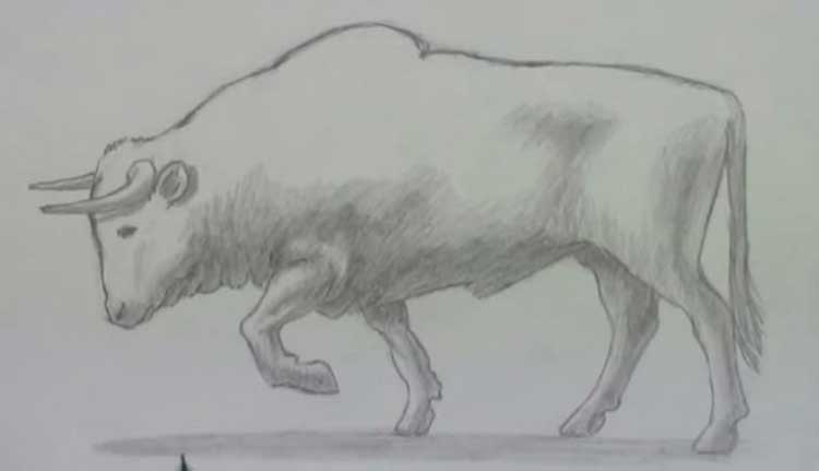 How to draw a bull