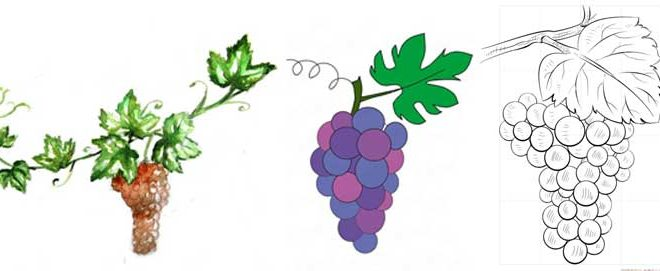 How to Draw Vines