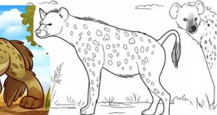 Hyena Drawing Step By Step