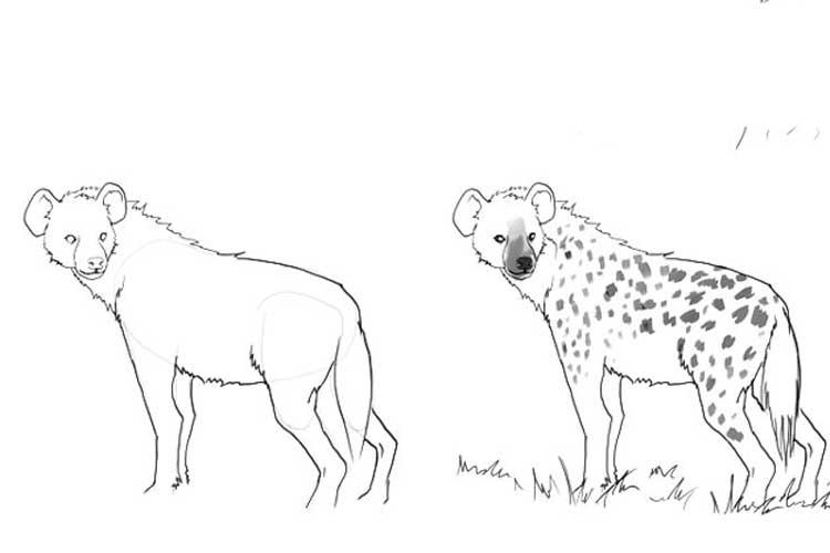 hyena drawing easy