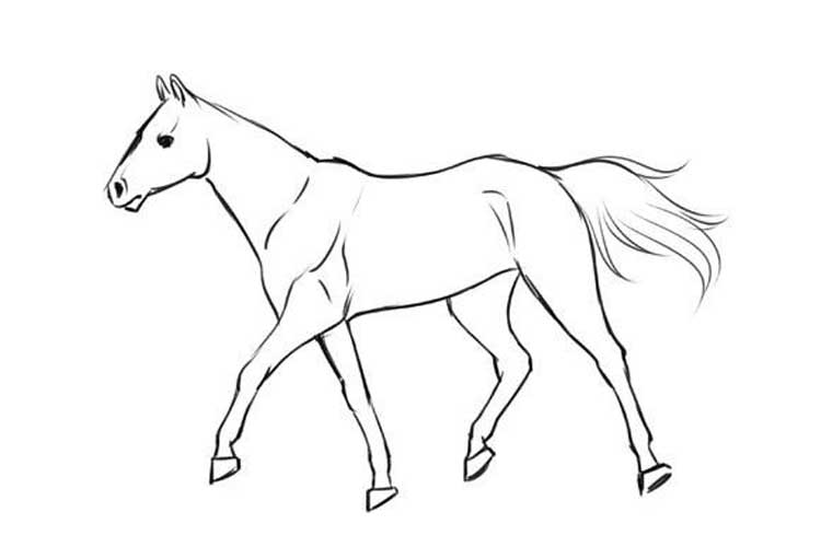 Horse side view