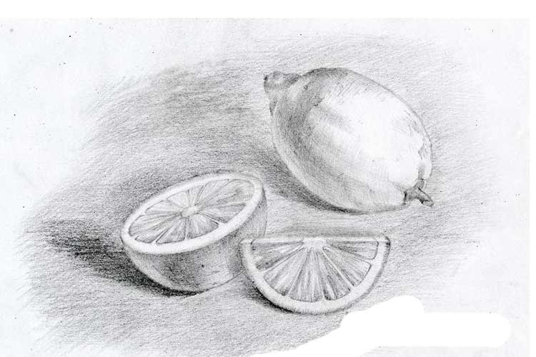 Lemon slice drawing