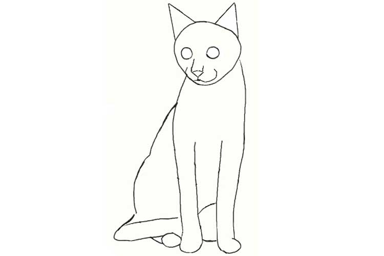 Drawing a Cat Front View