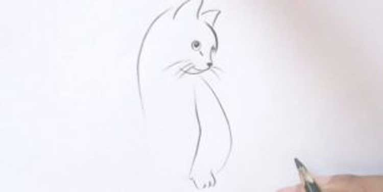 Drawing a cat sitting front view