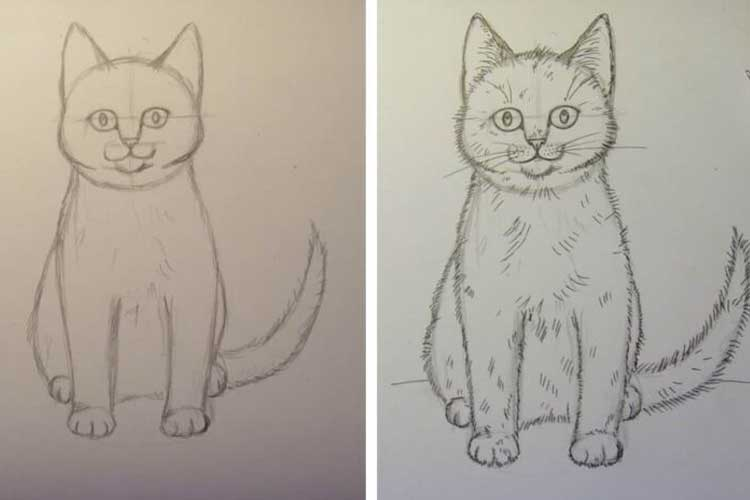 How to Draw a Cat Front View
