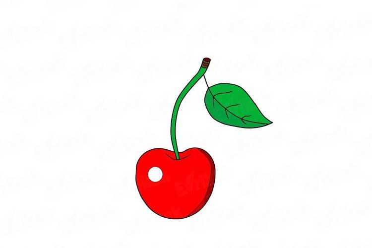 Cherry Drawing