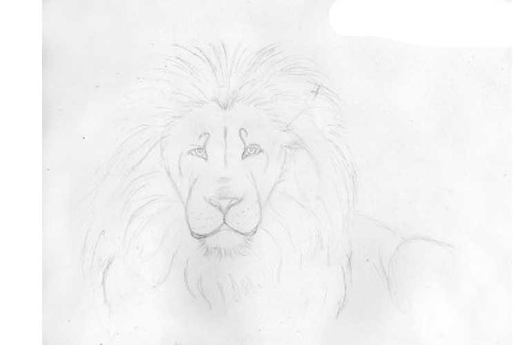 lion sketch easy