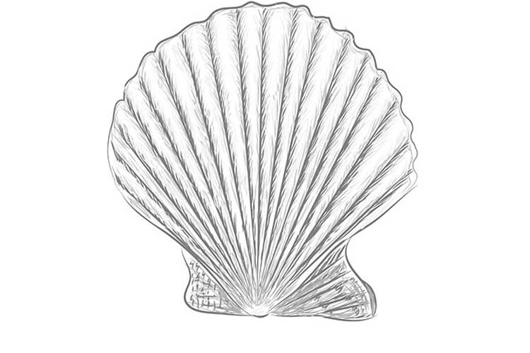seashell drawing