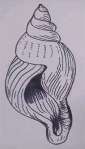 seashell drawing easy