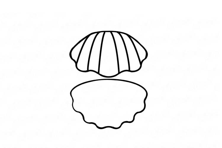 seashell line drawing