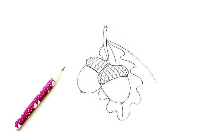 acorn drawing easy