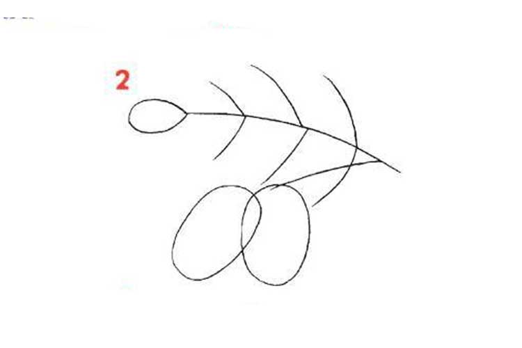 acorn drawing step by step