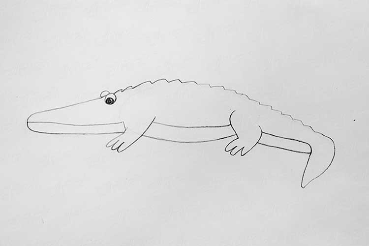 alligator drawing