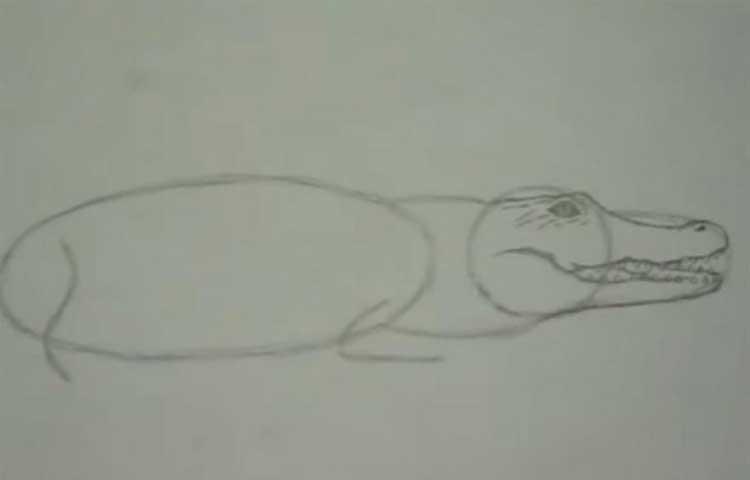 alligator drawing simple
