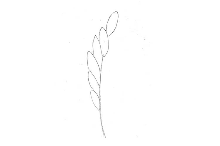 Wheat Drawing