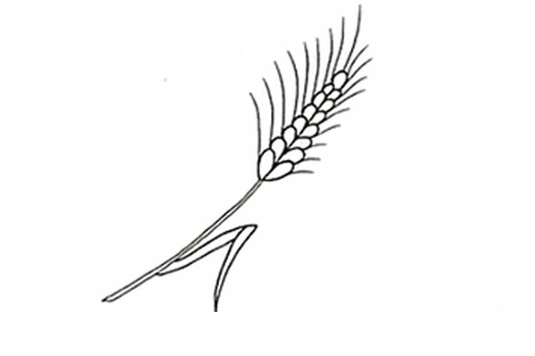 Wheat Drawing Simple